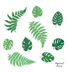 fern and monstera leaves vector image