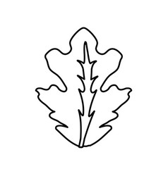 Figure delicious leaf lettuce organ food vector