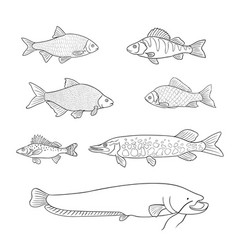 Freshwater fish in outlines vector