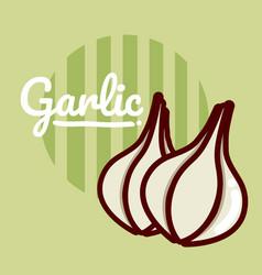 Garlic vegetable cartoon vector