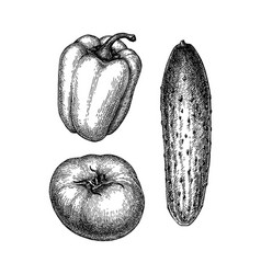 Ink sketch of vegetables vector