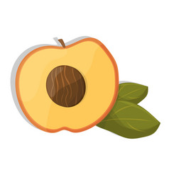 ripe sliced apricot on a white background vector image