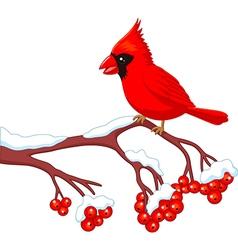 Cartoon beautiful cardinal bird posing vector image