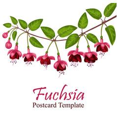 fuchsia postcard template vector image vector image