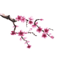 hand-drawn branch of sakura vector image