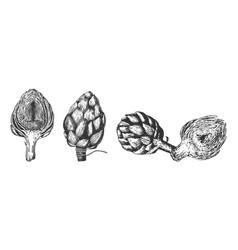 artichokes set for local farmers market vector image