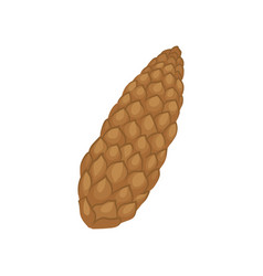 brown fir cone conical fruit of conifer tree vector image