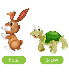 Opposite adjective words with fast and slow vector