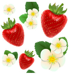 red ripe strawberries white flowers and green vector image