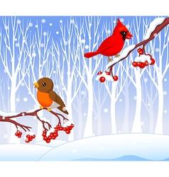 Cute cartoon robin bird and cardinal bird vector image