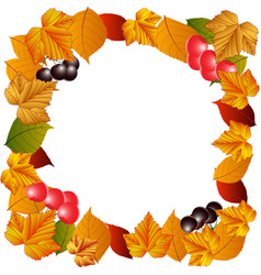 autumn leaves berries currants and cherries vector image