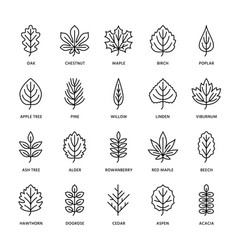 autumn leaves flat line icons leaf types rowan vector image