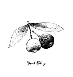 Hand drawn of brush cherries on white background vector