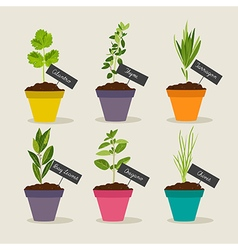 Herb garden with pots of herbs set 2 vector image