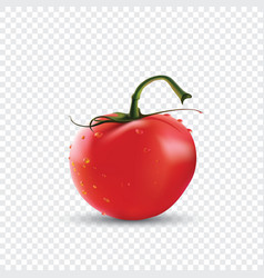 Photo-realistic of red fresh vector