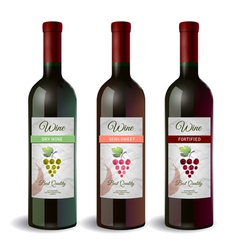 Set of Wine bottle with label Wine and grapes vector image