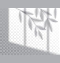 shadow overlay effects mock up window frame vector image