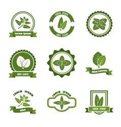 Mint leaves logos label emblems set vector image vector image