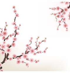 Blossoming branch of sakura EPS 10 vector image