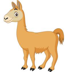 cartoon llama on white background vector image