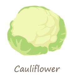 cauliflower icon isometric style vector image