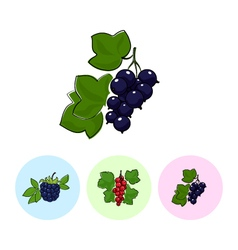 Fruit Icons Blackcurrant Redcurrant Blackberry vector image