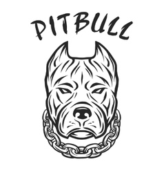 Head of a pit bull with a collar vector