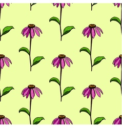 seamless pattern from flowers Echinacea vector image