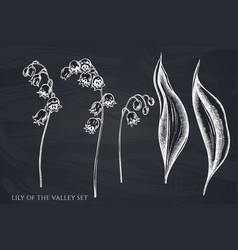 Set hand drawn chalk lily valley vector