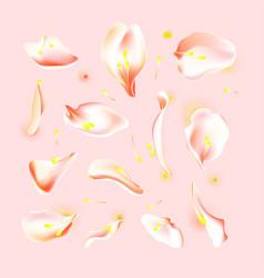 set of pink falling rose and sakura petals vector image