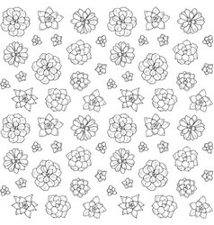 hand drawn succulent plant isolated vector image vector image