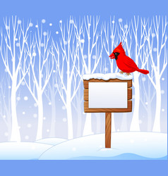 Cartoon cardinal bird on the blank sign vector image vector image