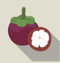 mangosteen isolated mangosteen icon vector image