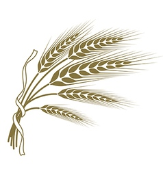 spikelets of wheat tied with a ribbon vector image vector image