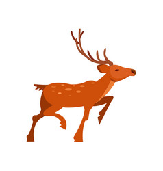 Brown spotted deer with antlers wild animal vector