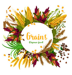 Grains fresh organic food poster vector