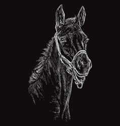 Horse portrait black 24 vector
