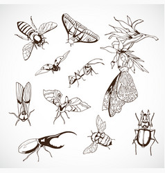 insect set hand drawn drawn image vector image