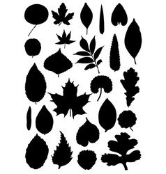 Leaf silhouette collection vector