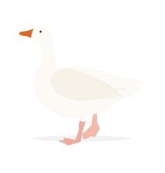 poultry farm goose vector image