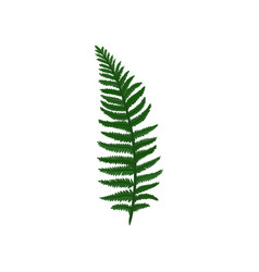 branch of green davallia fern tropical asian vector image