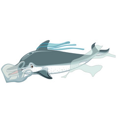 Dolphin and plastic bag on white background vector