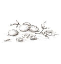 Hand drawn olives vector image