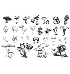 hand drawn sketch of mushrooms vector image