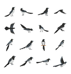 Magpie crow bird icons set flat style vector