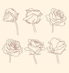 Rose flowers linear graphic drawing set vector