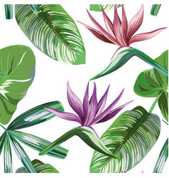 Vivid strelitzia rainforest flowers foliage vector