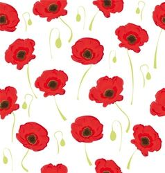 poppy flowers on white background vector image vector image