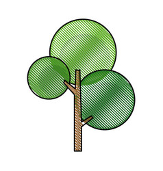 drawing green tree nature flora botanical vector image vector image