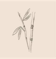 bamboo sketch vector image